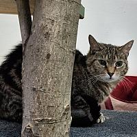 Adopt A Pet :: Rascal - Elyria, OH