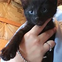 Adopt A Pet :: Bruce - Loxahatchee, FL