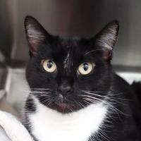 Adopt A Pet :: Boe - Santa Barbara, CA