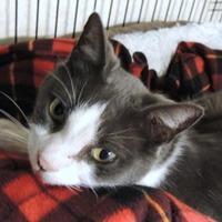 Adopt A Pet :: Denny - Westville, IN