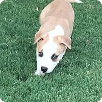 Adopt A Pet :: Zorro 🍁 ADOPTED! - Brattleboro, VT