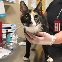Adopt A Pet :: Krislyn 648-17 - Cumming, GA