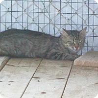 Adopt A Pet :: Marbella - Mexia, TX
