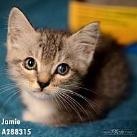 Adopt A Pet :: CLEO - Conroe, TX