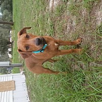 Adopt A Pet :: Lefty and Sky - Brooksville, FL