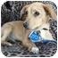 Photo 3 - Terrier (Unknown Type, Medium)/Dachshund Mix Puppy for adoption in Vista, California - Missy