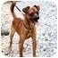 Photo 2 - Chihuahua Mix Dog for adoption in Cleveland, Georgia - Radar