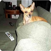 Adopt A Pet :: Chulu - Houston, TX