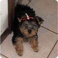 Adopt A Pet :: Juliet - Conroe, TX