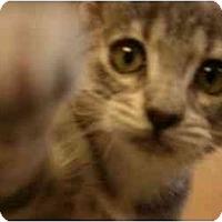 Adopt A Pet :: Kiki - Davis, CA