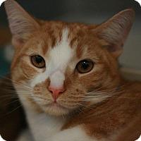 Adopt A Pet :: Floyd - Canoga Park, CA