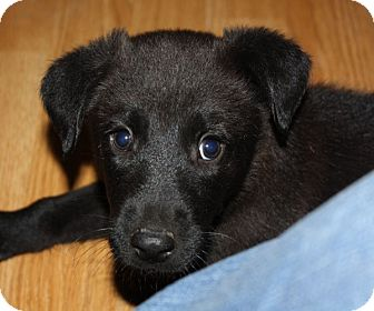 Husky Mix Puppy for adoption in kennebunkport, Maine - Zack