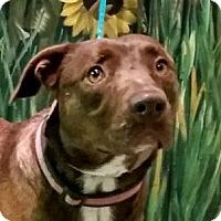 Adopt A Pet :: Reeses - Port Washington, NY