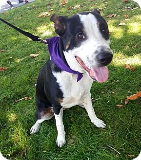 Terrier (Unknown Type, Medium) Mix Dog for adoption in Detroit, Michigan - Miso-Adopted!