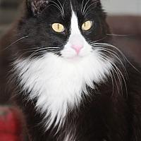 Adopt A Pet :: Dawson - Rawlins, WY