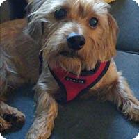 Adopt A Pet :: Marco - Long Beach, NY