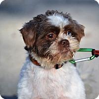 Shih Tzu Dog for adoption in Union Grove, Wisconsin - Charlie