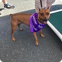 Adopt A Pet :: Speedy - Parsippany, NJ