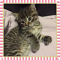 Adopt A Pet :: Bailey - Winnipeg, MB