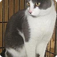 Adopt A Pet :: Ross - Dallas, TX