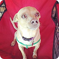 Adopt A Pet :: Will Ferrell - North Hollywood, CA