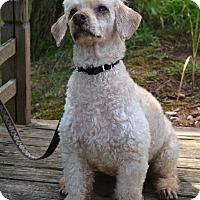 Adopt A Pet :: Moochie - Bridgewater, NJ