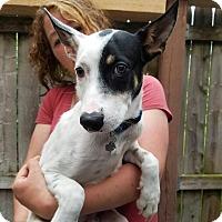Adopt A Pet :: Noah (In Foster) - Freeport, ME