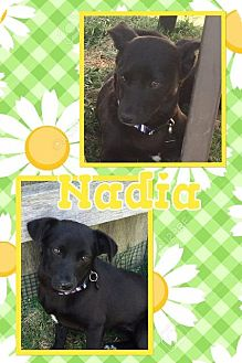 Chihuahua/Dachshund Mix Dog for adoption in Tomah, Wisconsin - Nadia