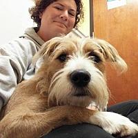 Adopt A Pet :: Casey - Florence, KY