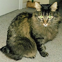 Adopt A Pet :: Hannah - Overland Park, KS
