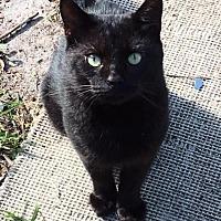 Adopt A Pet :: JACK-HIV POSITIVE - DeLand, FL