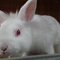 Adopt A Pet :: Dilbert - Williston, FL