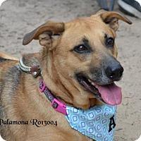 Adopt A Pet :: Palamona - Montgomery, TX