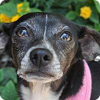 Adopt A Pet :: Vivian - Atlanta, GA
