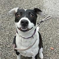 Adopt A Pet :: Jill - Olympia, WA