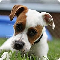 Adopt A Pet :: Isiah - Durham, NC