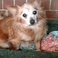 Adopt A Pet :: Missy - Evans, GA