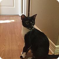 Adopt A Pet :: Athena - Waggaman, LA