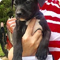Adopt A Pet :: Fern - Savannah, GA