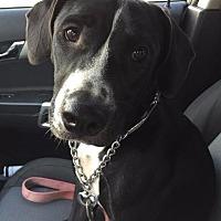 Adopt A Pet :: Deja - Victoria, TX