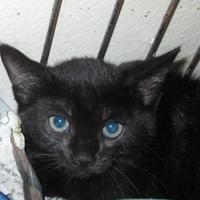 Adopt A Pet :: Pippin - Waxahachie, TX