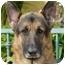Photo 3 - German Shepherd Dog Dog for adoption in Los Angeles, California - Sebastian von Sonntag
