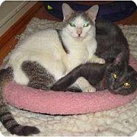 Adopt A Pet :: Caroline fka Shiloh - Schertz, TX