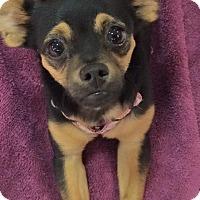 Adopt A Pet :: PACO - Odessa, FL