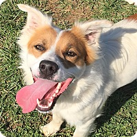 Adopt A Pet :: Wally - Russellville, KY