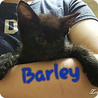 Adopt A Pet :: Barley - McDonough, GA