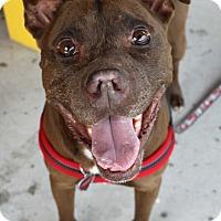 Adopt A Pet :: Dante - Snellville, GA