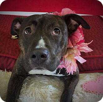 Terrier (Unknown Type, Medium) Mix Dog for adoption in Flint, Michigan - Daffodil (aka Pepper)
