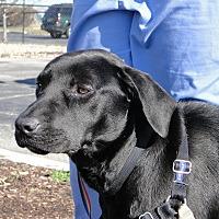 Adopt A Pet :: Penelope - Brattleboro, VT