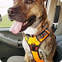 Adopt A Pet :: Bruce - Charlotte, NC